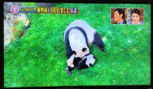 ホンマでっかーパンダ