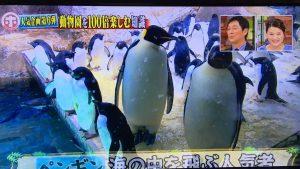 ホンマでっかーペンギン1