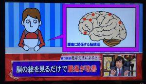 ホンマでっか-脳-1